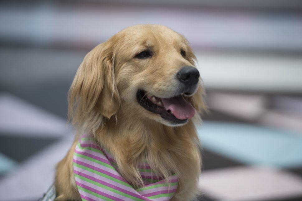 hospital dog