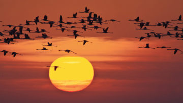 research birds